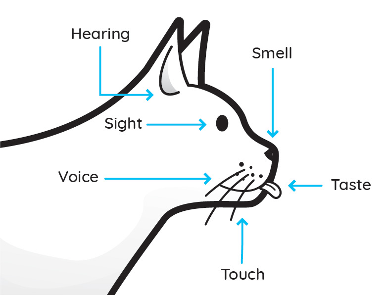 Cat Diagram Wiring Diagram